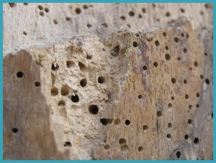 Woodworm prevention in Carlisle, Cumbria