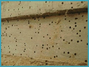 Woodworm removal in Carlisle, Cumbria